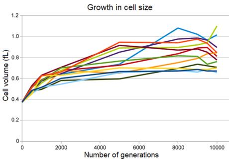 Lenski cell size growth