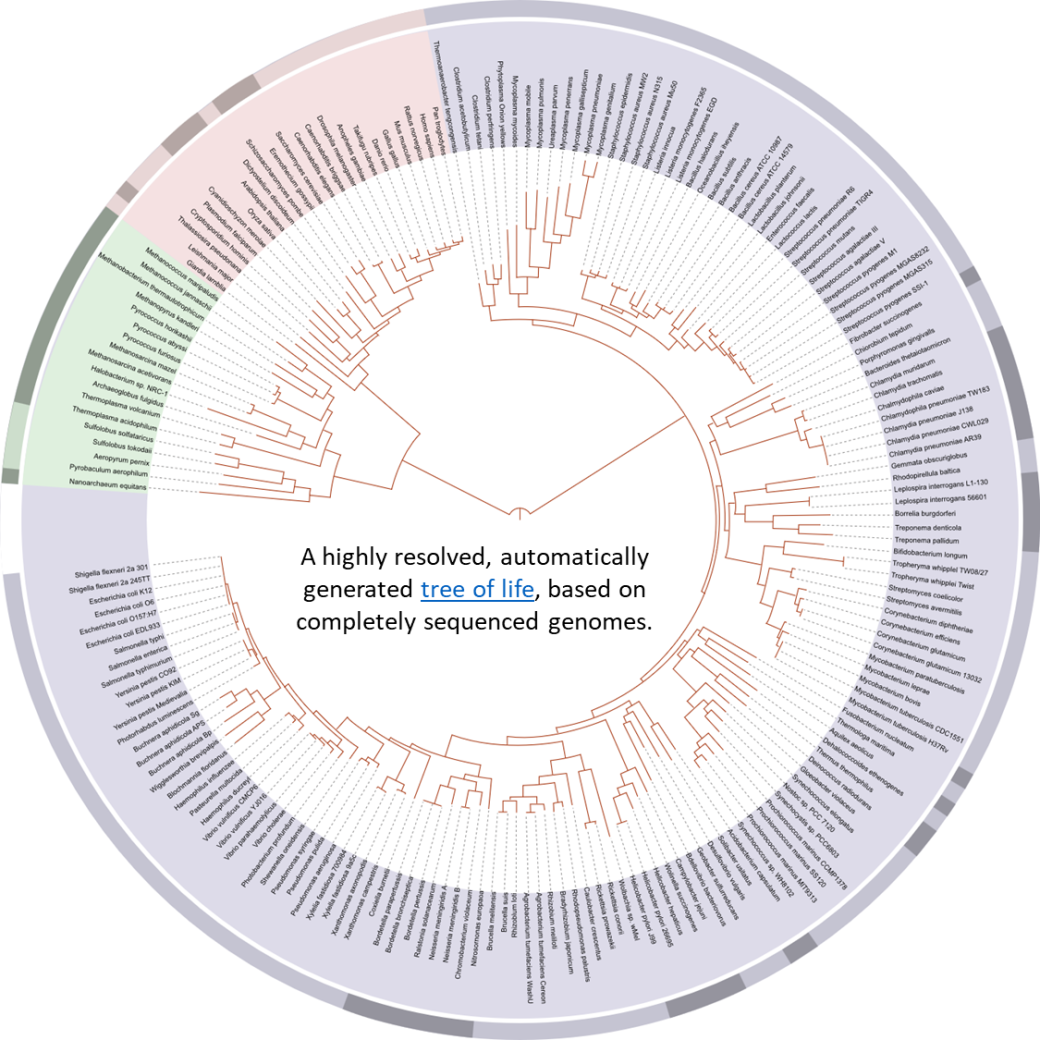 mapped genome tree of life