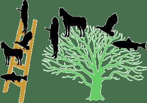 tree vs ladder