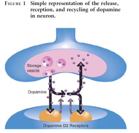 dopamine transmission across synaptic gap
